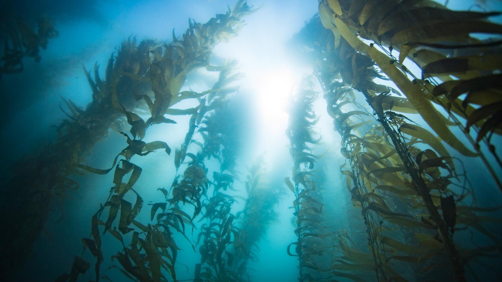 seaweed-4
