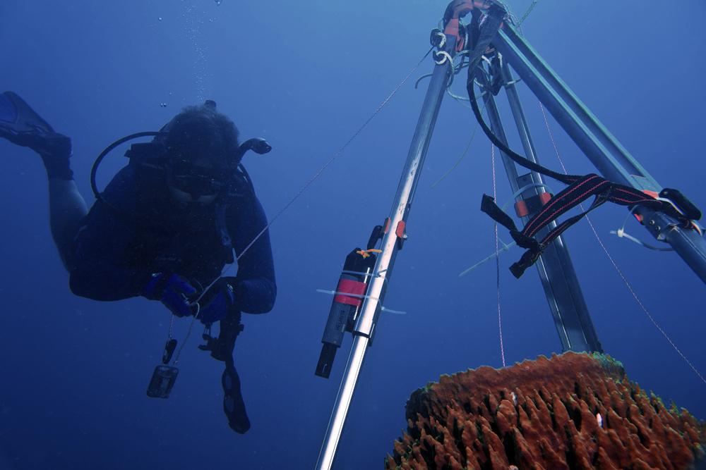 Brian Helmuth setting up tripod at a giant barrel sponge_by Jessica Torossian