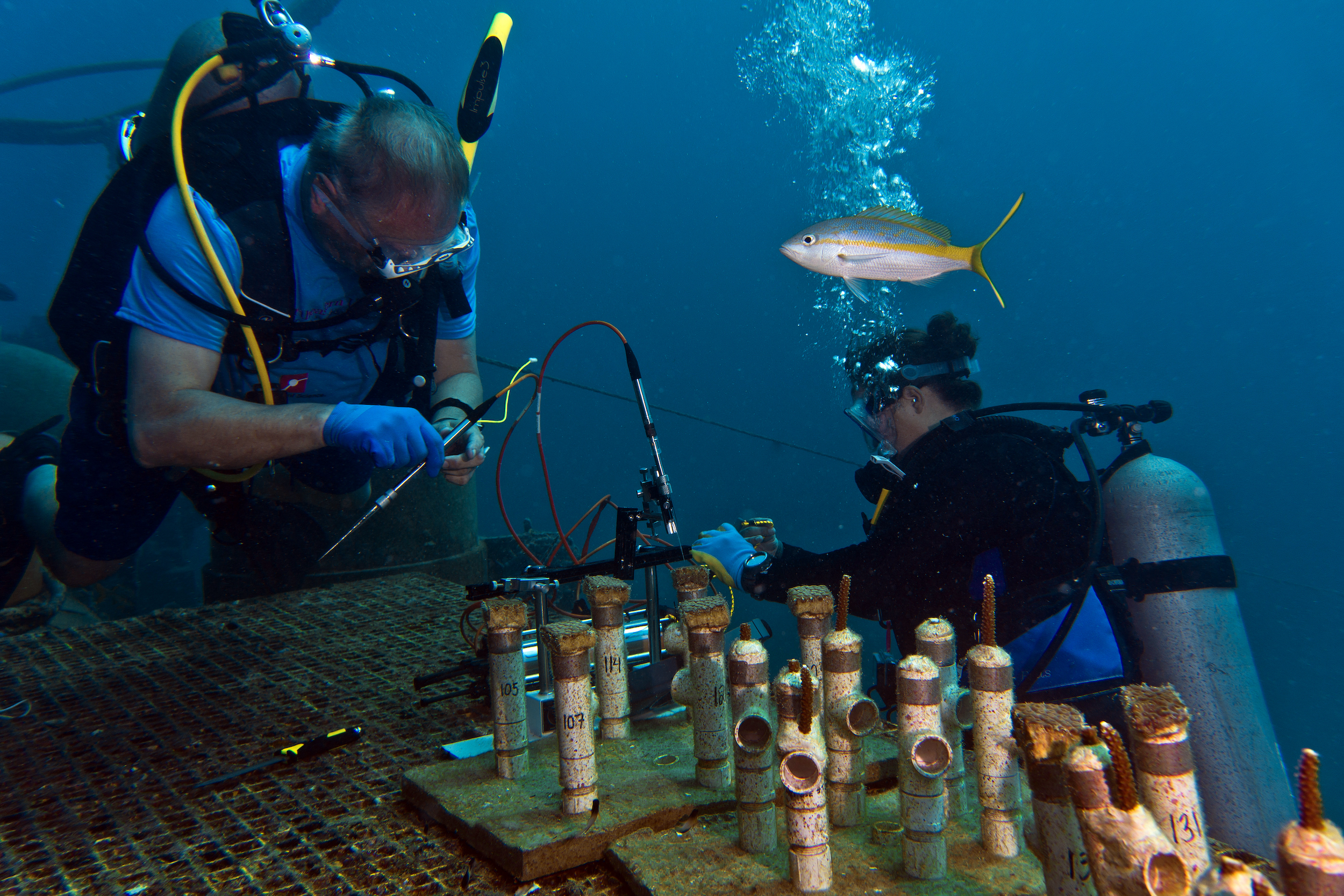 Mark Patterson and Sara Williams probing corals at Aquarius_by Christopher Marks