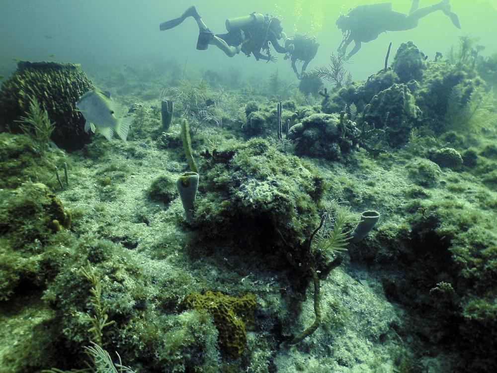 Giant barrel sponge reef_by Jessica Torossian